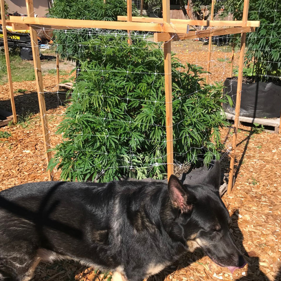 Plant outdoors with dog.