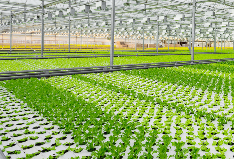 Hydroponic greenhouse image