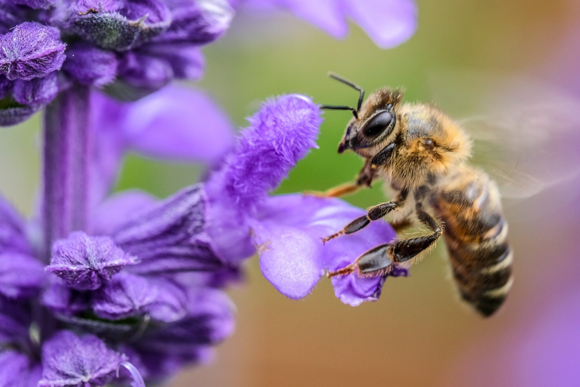 Image of a Bee on a Plant